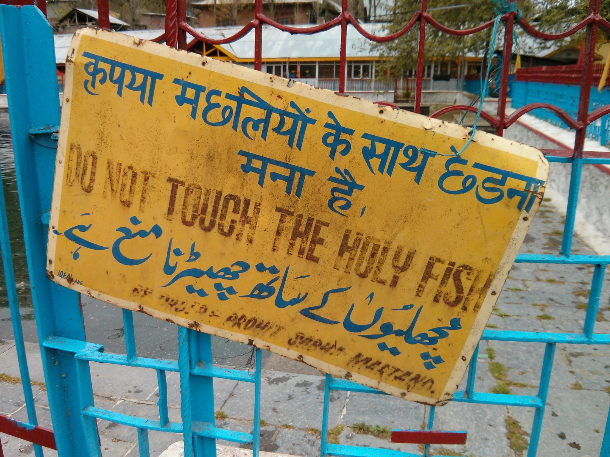Full photo: 'Do Not Touch The Holy Fish' sign. (Kashmir, India).
